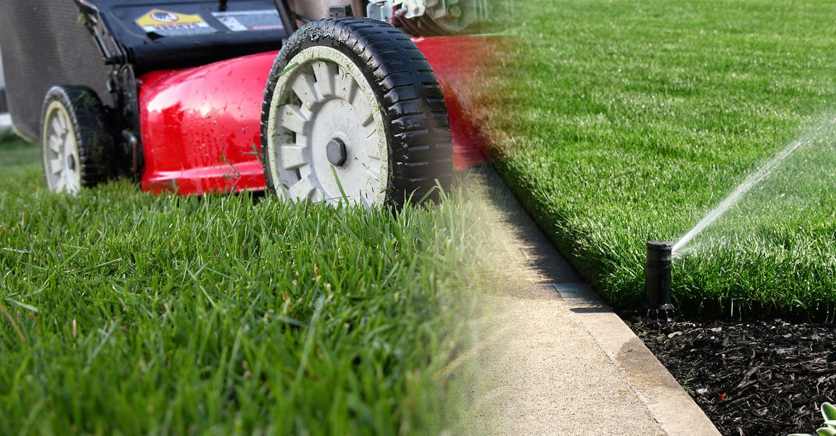 How to grow the best lawn with little effort