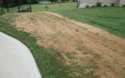 My lawn looks burnt!  Is it?  Or is it something else?