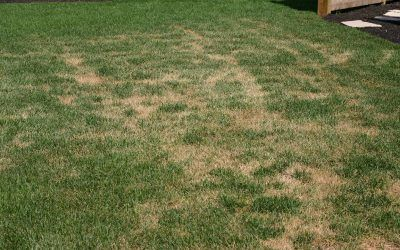 Will my lawn recover?