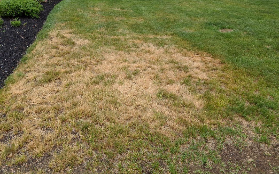 What are the brown spots on my lawn?